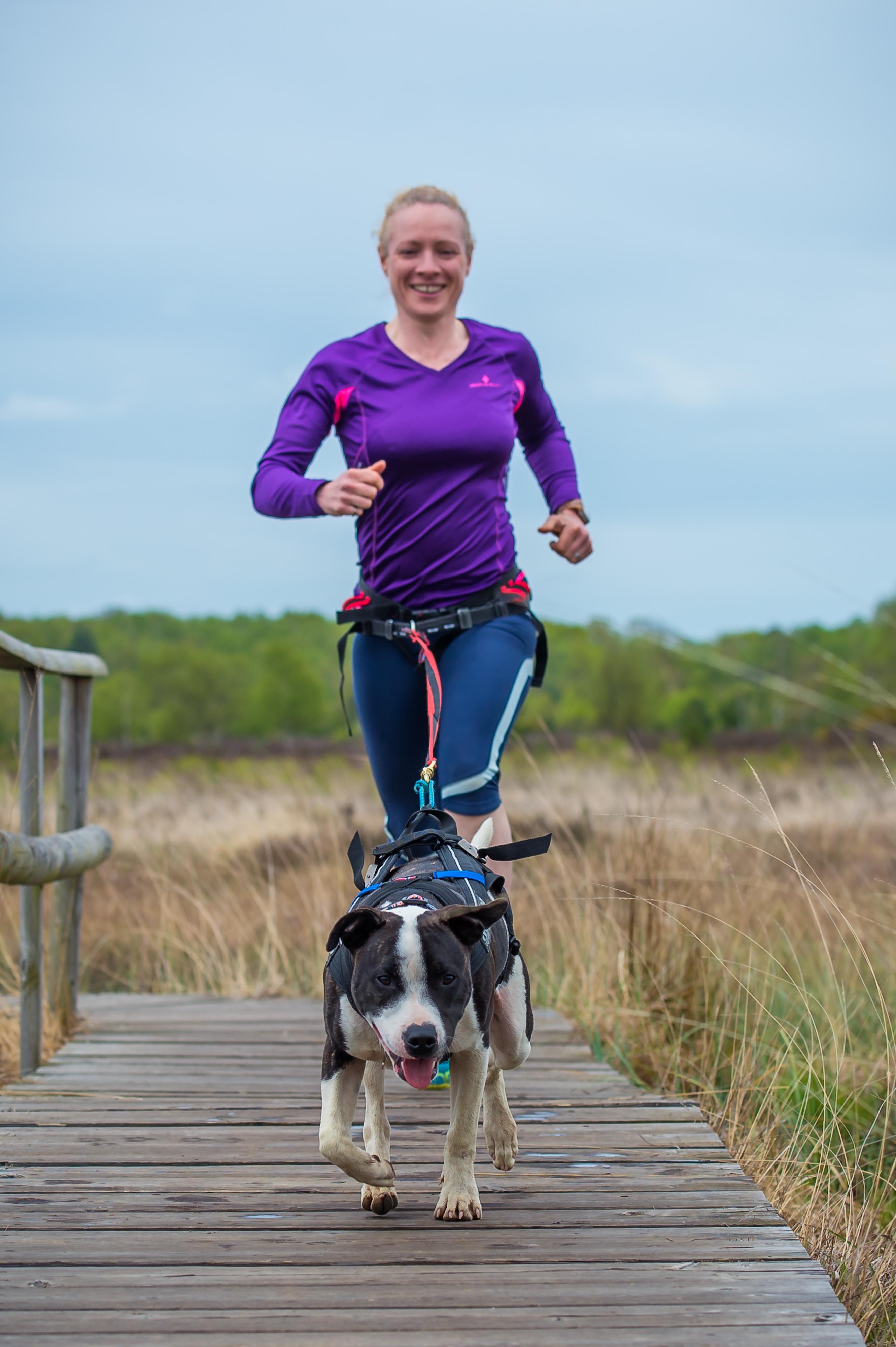 Running Walker Dog