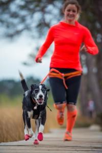 Dogfit Running waist belts