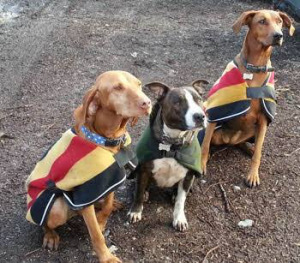 Canicross dogs in coats