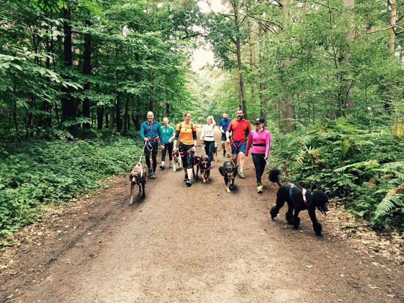 Group canicross runs help your dog to pull