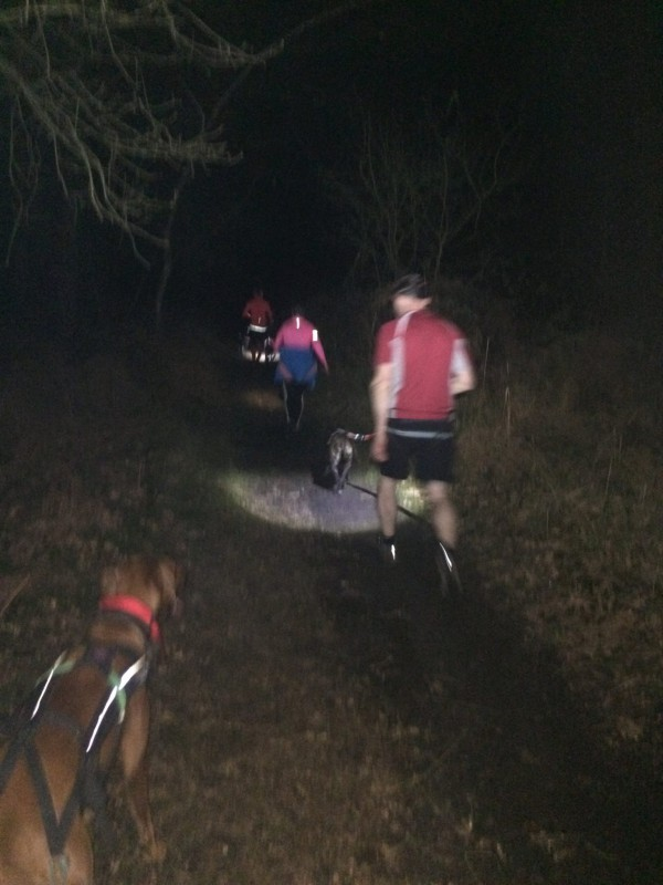 Canicross in the dark with decent head torches